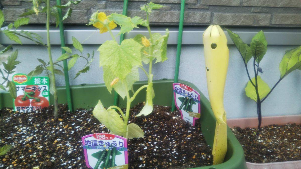 野菜の育て方 虫対策編 No.2