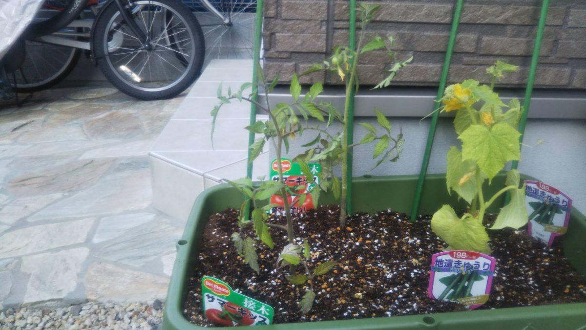 野菜の育て方 野菜ランキング!1位!